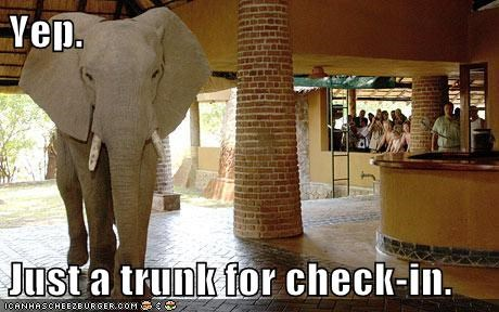 check in,trunk,elephant,puns