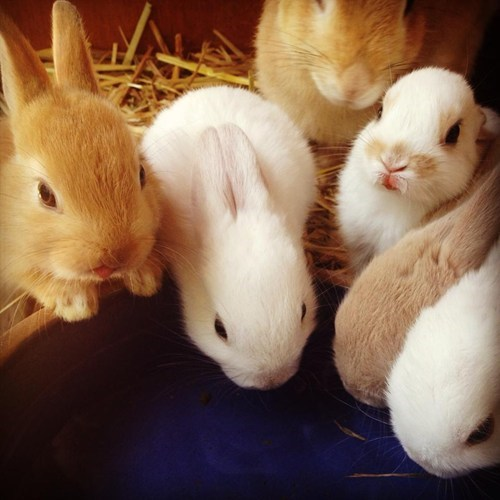 Reader Squee: Baby Bunnies