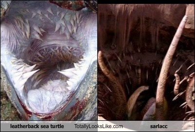 Leatherback Sea Turtle Totally Looks Like Sarlacc