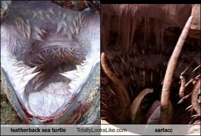 Leatherback Sea Turtle Totally Looks Like Sarlacc