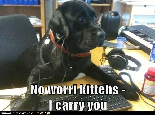 No worri kittehs -                          I carry you
