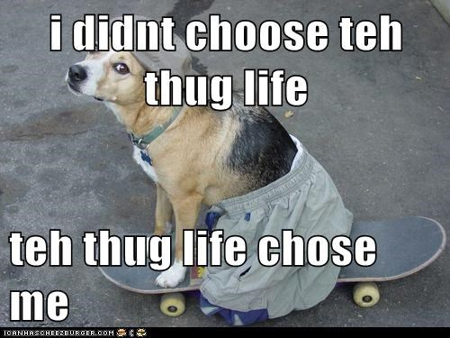 i didnt choose teh thug life  teh thug life chose me