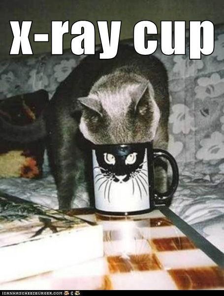 x ray,Cats,mug
