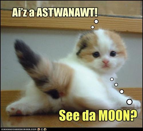 Astwanawt Kitteh!
