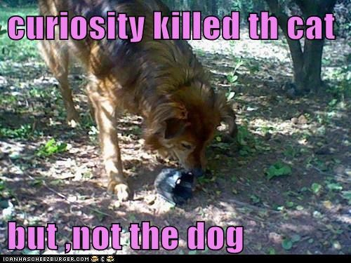 curiosity killed th cat  but ,not the dog
