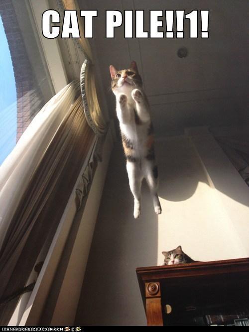 CAT PILE!!1!