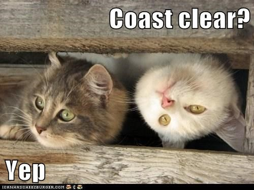 Coast clear?  Yep