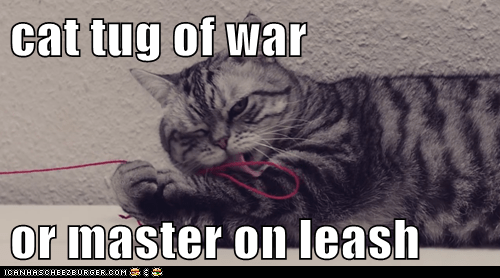 cat tug of war  or master on leash