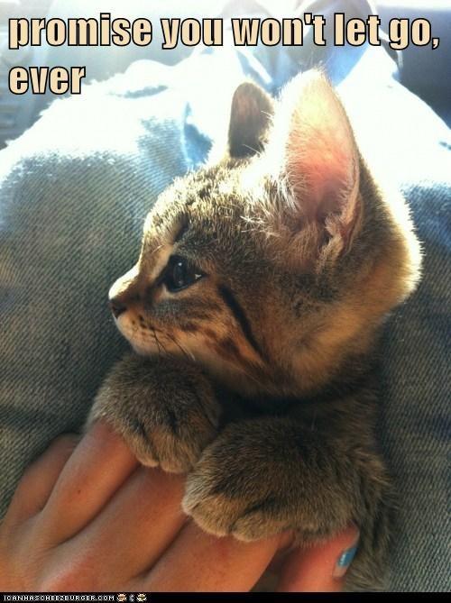 cat,kitten,funny,kitty,love