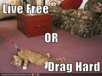 Live Free OR Drag Hard