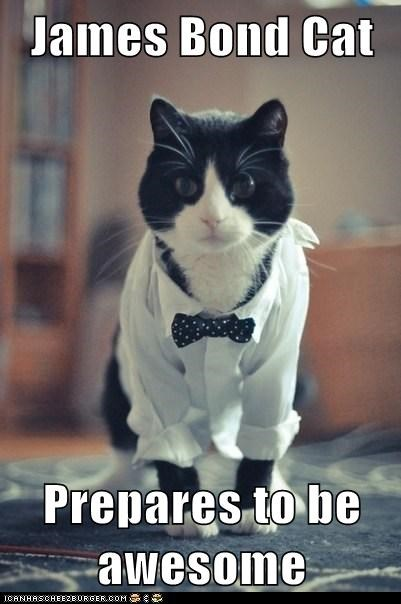James Bond Cat  Prepares to be awesome
