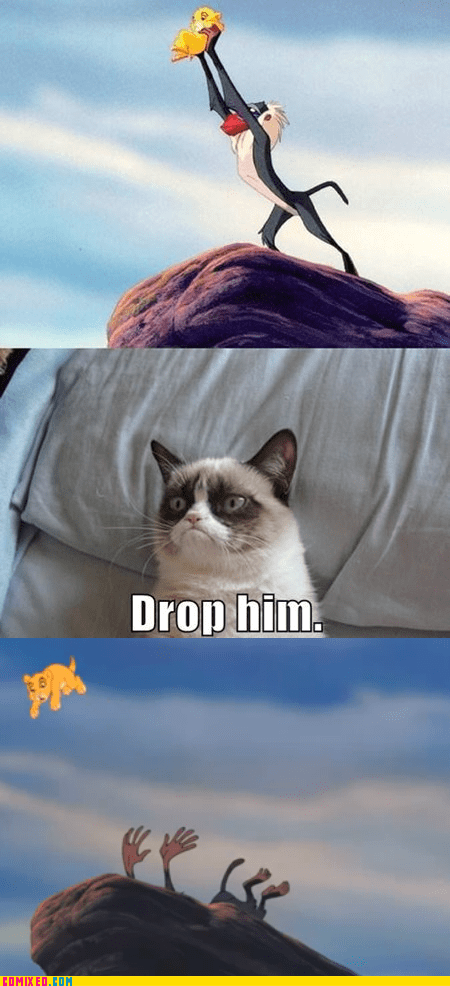 Reframe,the lion king,Grumpy Cat