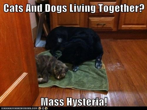 Cats And Dogs Living Together?  Mass Hysteria!