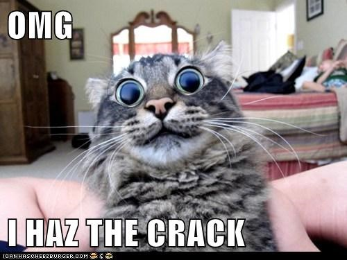 OMG  I HAZ THE CRACK