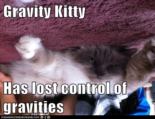 Gravity Kitty  Has lost control of gravities
