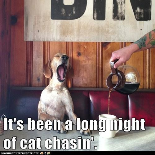 It's been a long night of cat chasin'.