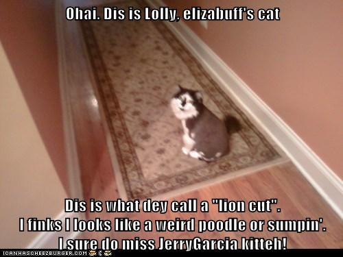 """Ohai. Dis is Lolly, elizabuff's cat  Dis is what dey call a """"lion cut"""".                                                 I finks I looks like a weird poodle or sumpin'."""