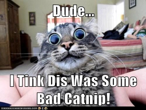 Dude...  I Tink Dis Was Some Bad Catnip!