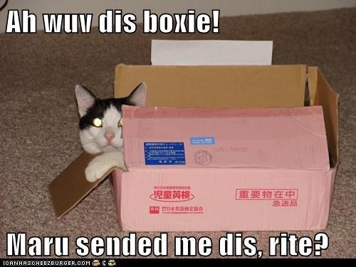 Ah wuv dis boxie!  Maru sended me dis, rite?