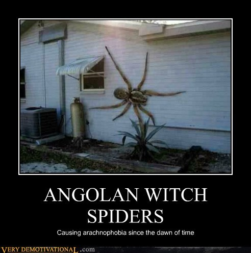 Angola Witch Spider http://cheezburger.com/7055081984
