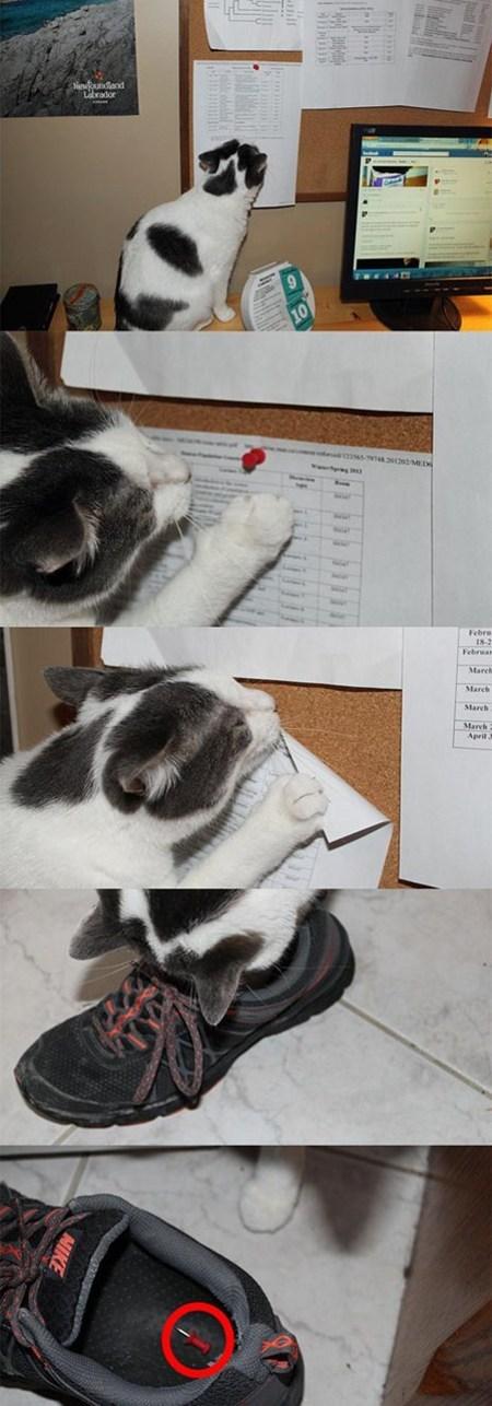 tack,jerks,Cats