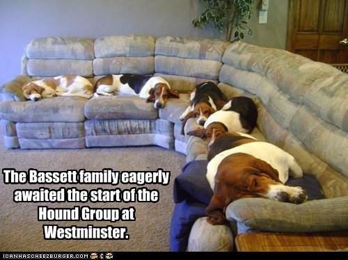 The Bassett family eagerly awaited the start of the  Hound Group at Westminster.