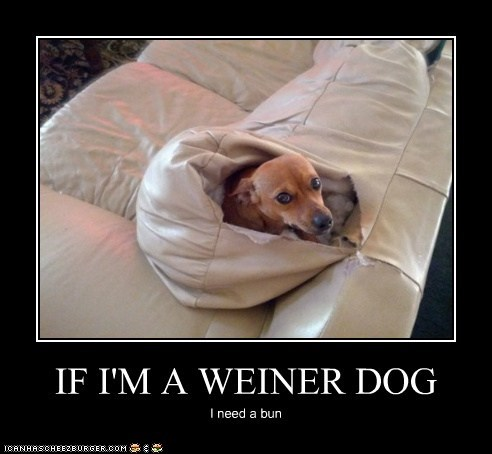 Weiner Dog Meme if i 39 m a Weiner Dog