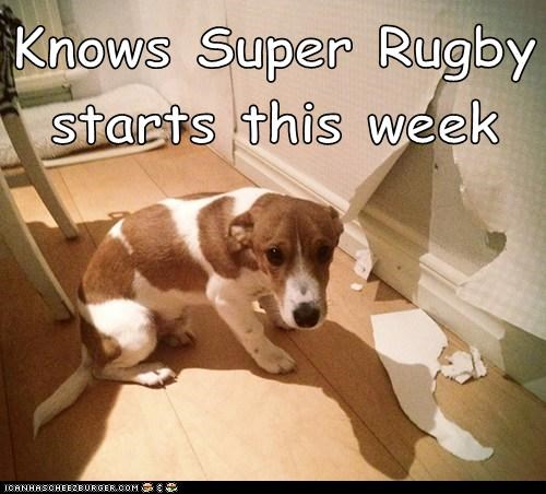 Knows Super Rugby starts this week