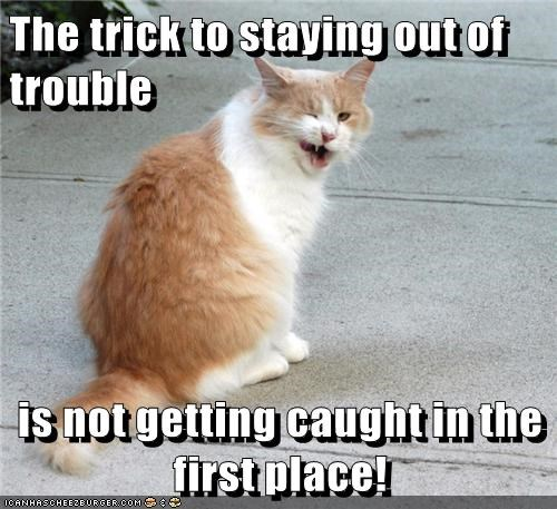 The First Thing a Kitty Learns: Don't Get Caught!