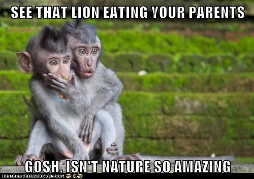 SEE THAT LION EATING YOUR PARENTS  GOSH, ISN'T NATURE SO AMAZING