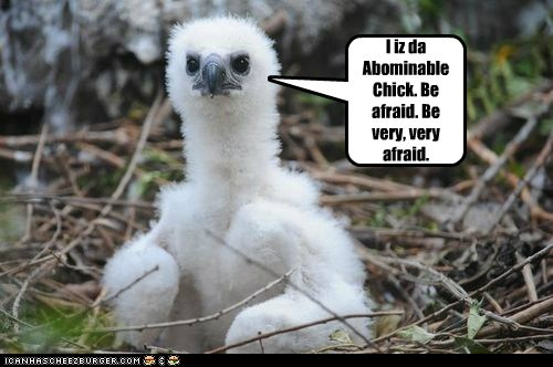 I iz da Abominable Chick. Be afraid. Be very, very afraid.