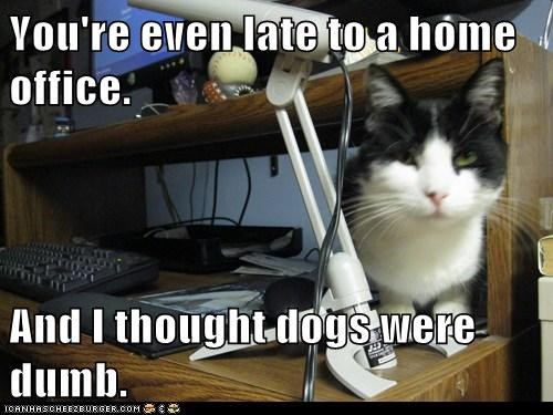 You're even late to a home office.  And I thought dogs were dumb.