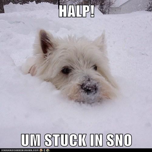 HALP!  UM STUCK IN SNO