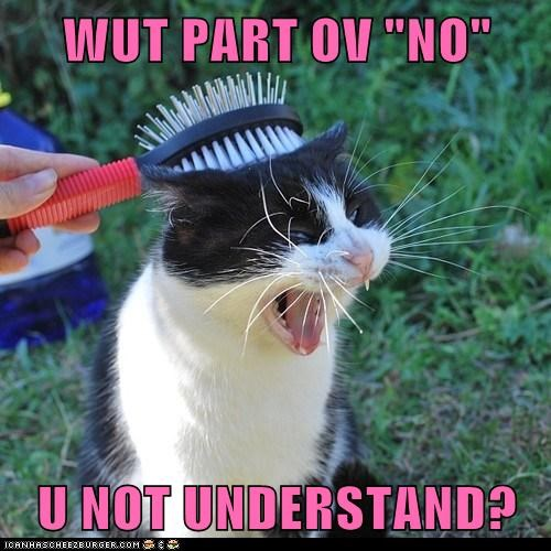 brush,no,Cats