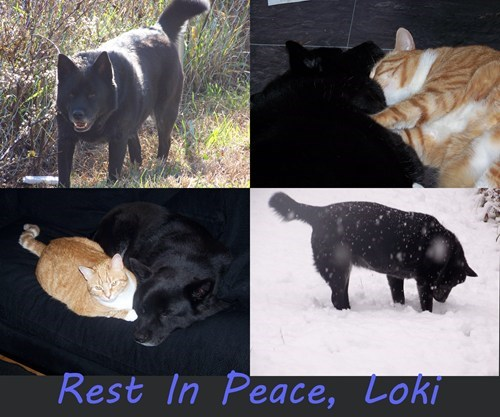 rest in peace,dogs,reader squee,snow,Cats,squee