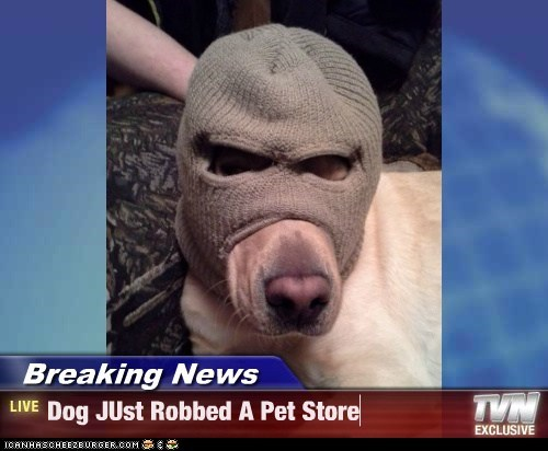 Breaking News - Dog JUst Robbed A Pet Store