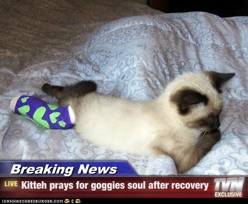 Breaking News - Kitteh prays for goggies soul after recovery