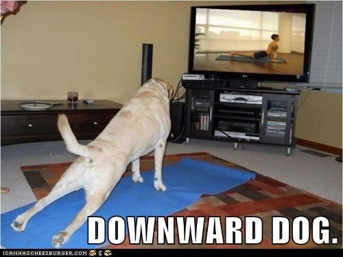 DOWNWARD DOG.