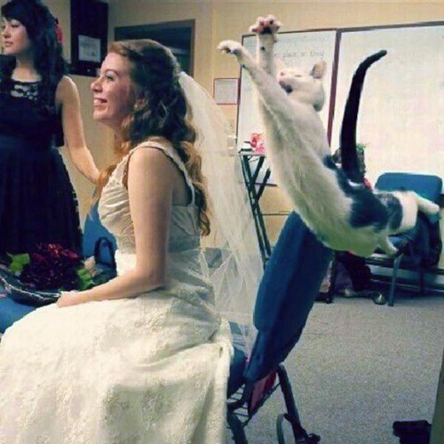 Calm Down, She Didn't Even Throw the Bouquet Yet