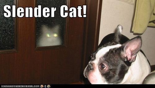 Slender Cat!