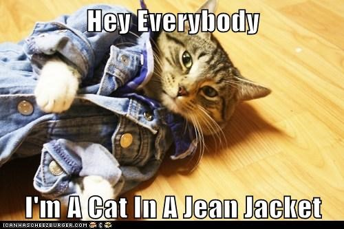 Obvious Cat - Wearing A Jean Jacket