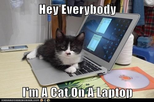 Obvious Cat - Lying On A Laptop