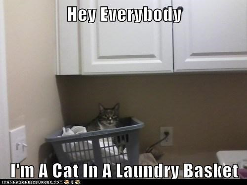Obvious Cat - In A Laundry Basket