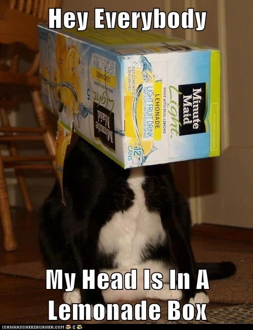 Obvious Cat - Has Head In Lemonade Box