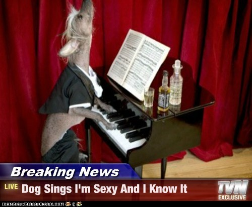 Breaking News - Dog Sings I'm Sexy And I Know It