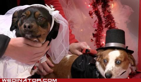 Seriously Stylish Doggie Wedding
