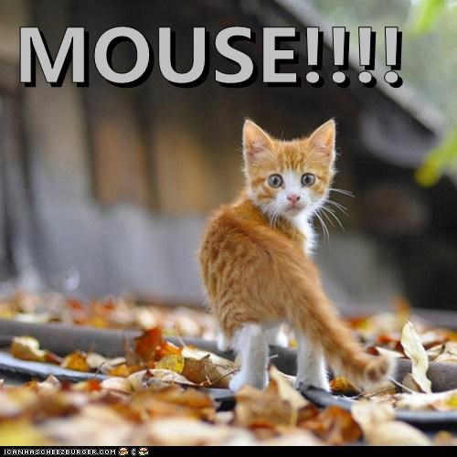 MOUSE!!!!