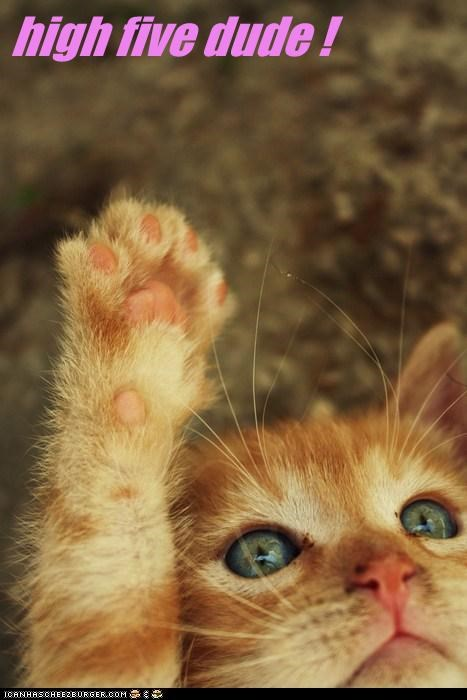high five dude !