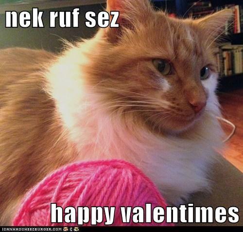 nek ruf sez  happy valentimes