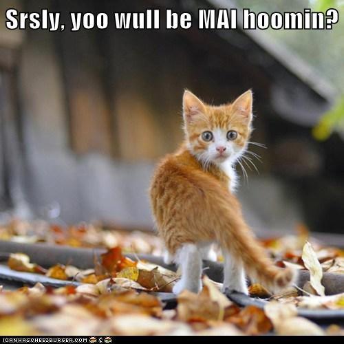 Srsly, yoo wull be MAI hoomin?